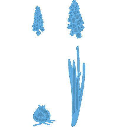 Tiny`s grape and hyacinths